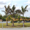 Oakland Park Tree Canopy Project
